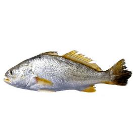 דג מוסר ים במשלוח עד הבית