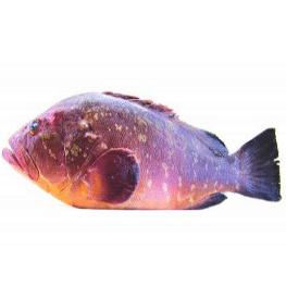 לוקוס אדום (פורוג') מחנות דגים ברעננה