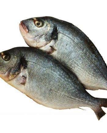 whole Denis fish