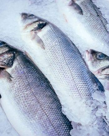 fresh sea bass whole